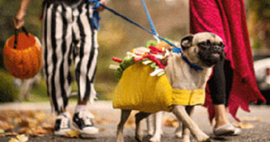 Pet Costume Contest at Petco