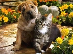Discount Pet Vaccination Clinic