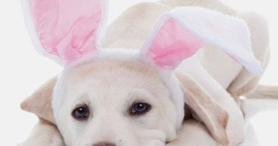 Pet Photos with the Easter Bunny at Round Rock Premium Outlets