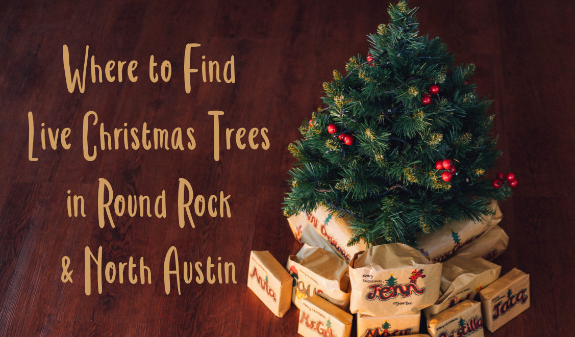 Where To Find Live Christmas Trees In Round Rock & North