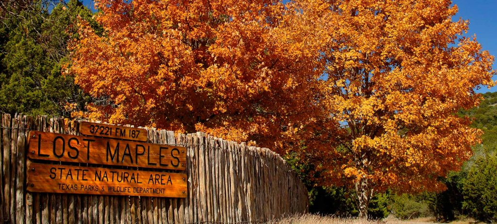 10 Fall Getaways from Round Rock - Lost Maples State Natural Area