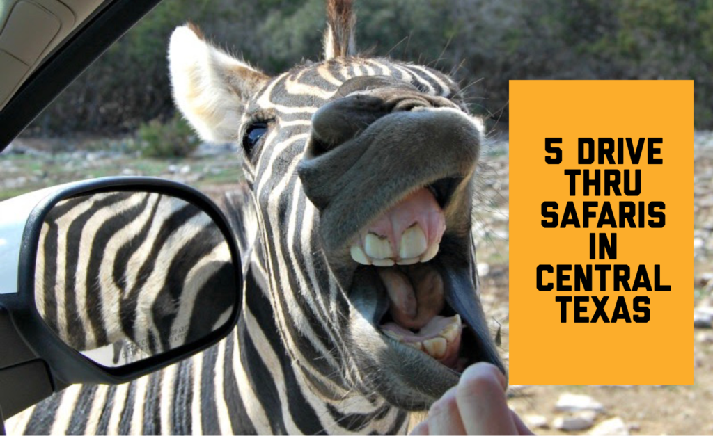 drive-thru safaris in Central Texas